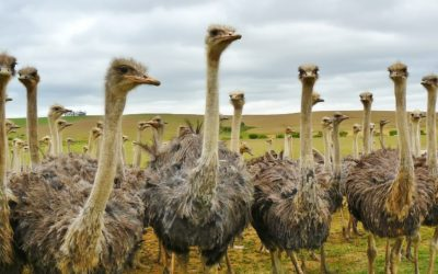 Preventing Your Own Dementia – Are You Being A Bit of An Ostrich?